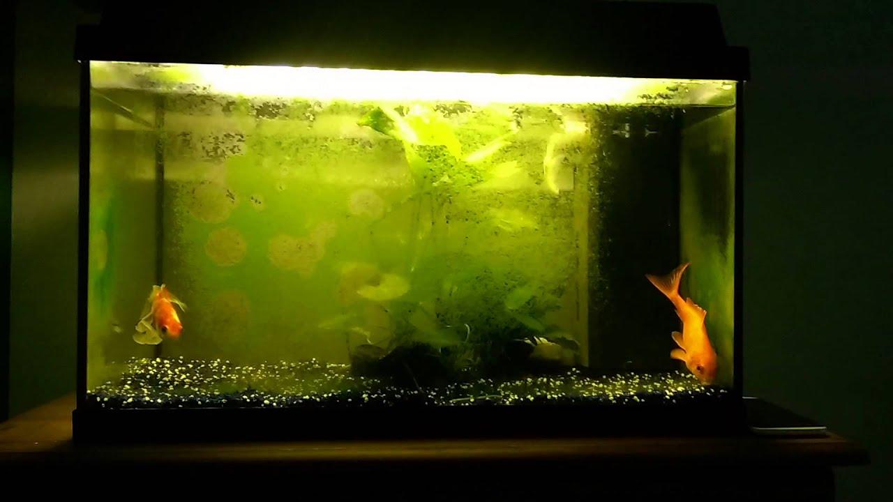 aquarium met algen youtube. Black Bedroom Furniture Sets. Home Design Ideas