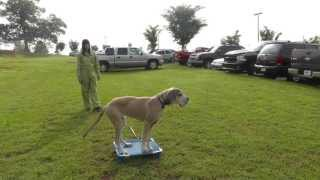 Sit Up N Listen Dog Training: Cute Puppy Go To Place