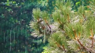 Relaxing Nature Sounds: Inspiring thunderstorms & bird sounds in summer - Live 24/7