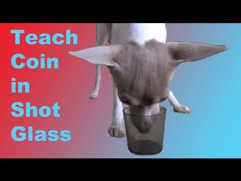 Dog trick Tutorial: Coin in Shot Glass