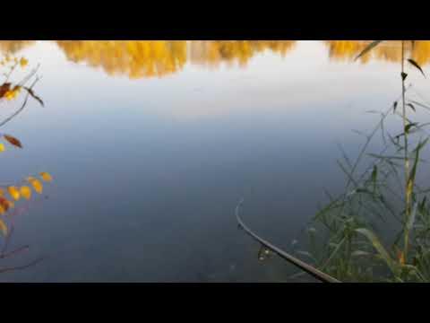 Longital Fishing Team - SPRO - IKIRU JOINTED 110 FLOATING