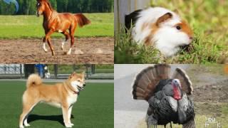 МАЛЫШ УЧИТ ЖИВОТНЫХ домашние животные Супер Взаимная подписка 2017 !!! ★5 подписчиков на канал!