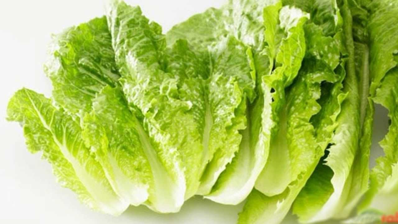 How lettuce patta salada is beneficial for our health and beauty