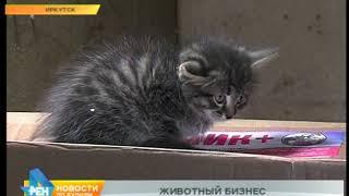 В Иркутске участились случаи, когда люди находят десятки выброшенных котят