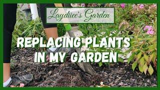 Garden Vlog + Planting Projects + Pruning Limelight Hydrangea🌱|| Kreatyve Laydiiee