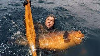 captura de un mero gigante con el seawoolf sub stella 105