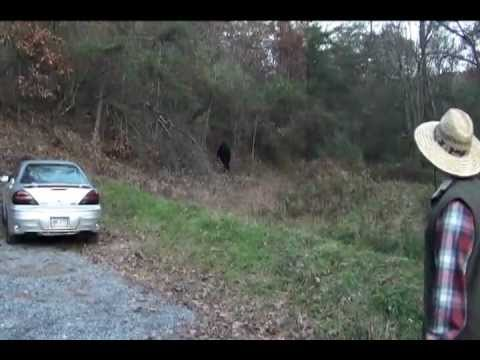Bigfoot attack caught on camera!!! Real or fake??? - YouTube