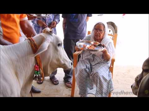 Cow Worship By Mata Ji 03-05-2017 || Gau Pooja || Devi Chitralekhaji
