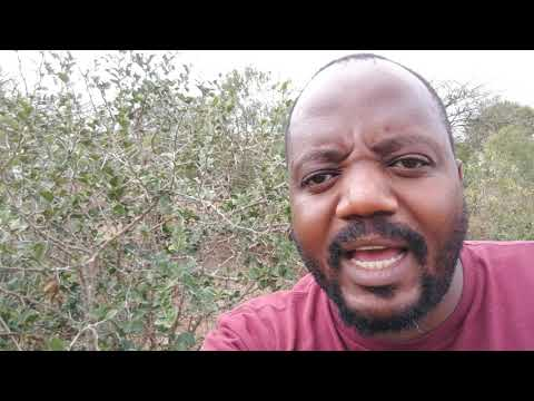 Alibongwa idlozi | Gogo Bathini Mbatha TV