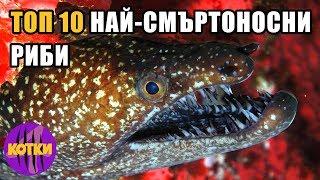 Top 10 най-смъртоносните риби на света