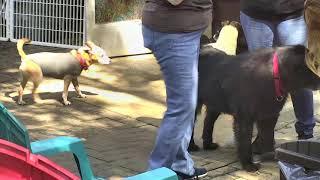 Outside Dog Yard Cam 09-19-2018 10:30:25 - 11:30:26