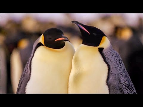 Best Antarctic Animal Moments | Top 5 | BBC Earth