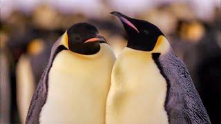 Best Antarctic Animal Moments | Top 5 | BBC Earth
