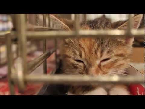 Homeward Bound Animal Rescue (Final Cut)