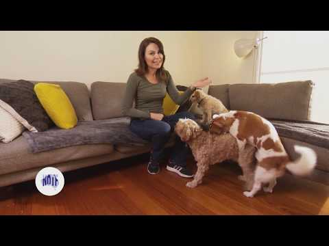 Why does my dog hump? - Series 3 - Episode 8 from YouTube · Duration:  1 minutes 48 seconds