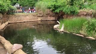 神戸の王子動物園は日本で唯一ジャイアントパンダとコアラを同時に見る...