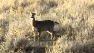 January Antlerless Deer Seasons 2011