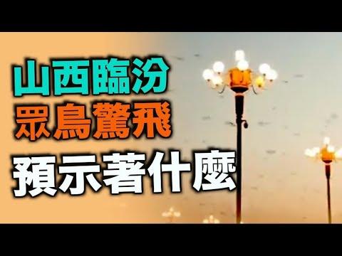 7月30日 山西临汾 大量燕子快速疾飞 不知道预示这什么......【希望之声TV】
