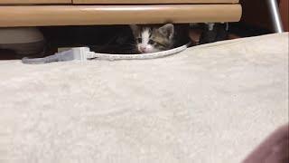 テレビボードの隙間から顔を覗かせる子猫