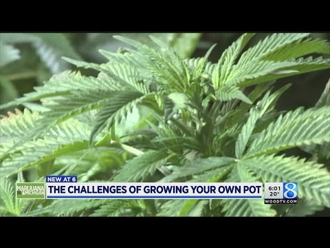Growing Your Own Pot: The Costs And Challenges