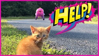 Lost Baby Kitten Rescue and Checkup at the Vet Pretend Play W/ Power Wheels Ride On Princess Toy