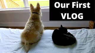 [Silent VLOG] Daily Life, Simple Living, Scottish Terriers, Cat, Laundry, Cooking