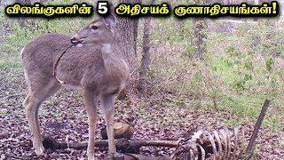 விலங்குகளில் கண்டறியப்பட்ட 5 அதிசயக் குணாதிசயங்கள்! | 5 Unbelievable Facts about Animals