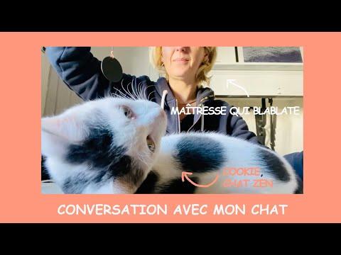Conversation avec mon chat - Chat 23