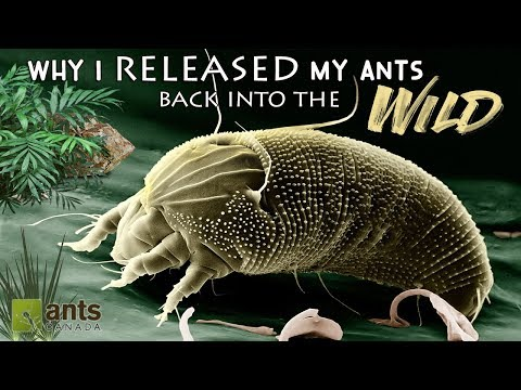 WHY I RELEASED MY PET ANTS BACK INTO THE WILD - VERY SAD DAY!
