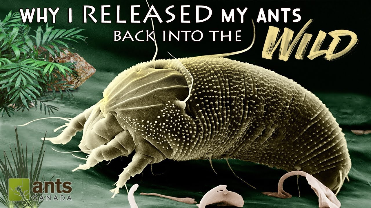 why-i-released-my-pet-ants-back-into-the-wild-very-sad-day