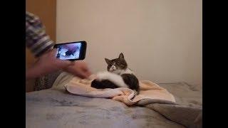 Un chat lausannois traqué par GPS