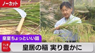 皇居の稲 今年も豊かに 盆栽愛好家なら誰しも知る切れ味?【皇室ちょっといい話】(39)(2021年9月24日)