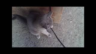Видео. Первая прогулка кота  в этом году.