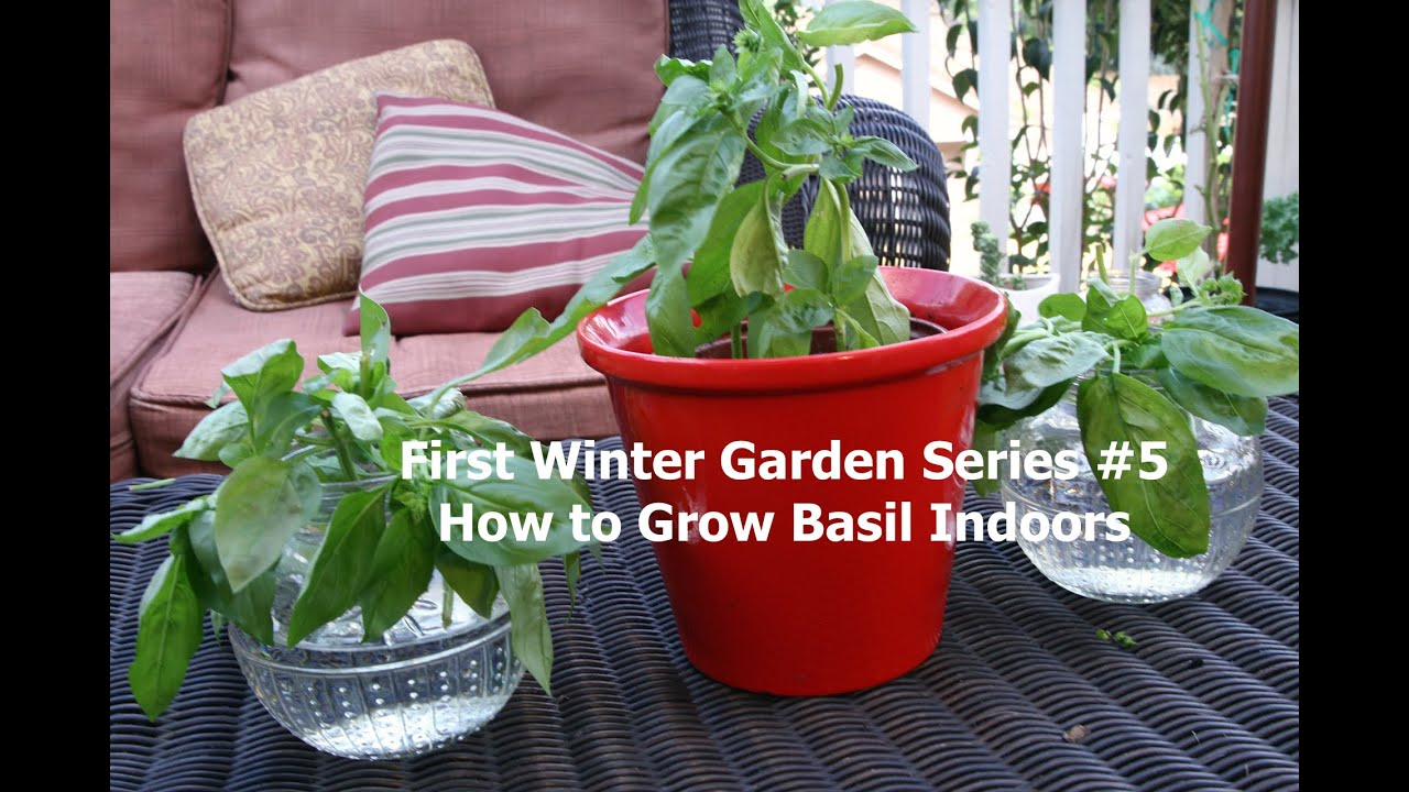 first winter garden series 5 how to grow basil indoors youtube
