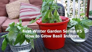 First Winter Garden Series #5: How to Grow Basil Indoors