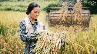 The rice ripe season, mother's happiness and hard-work (Mother harvests rice) | Ẩm Thực Mẹ Làm
