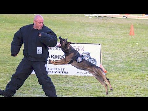 2017 South FL K9 Competition Hard Dog Fast Dog