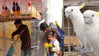 Enjoying & Spending Time With Birds & Rejuvenate/Love & Play With Birds & Get rid of Mental Stress.