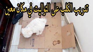 """تدريب الكلاب على """" الحمام"""" التوليت"""