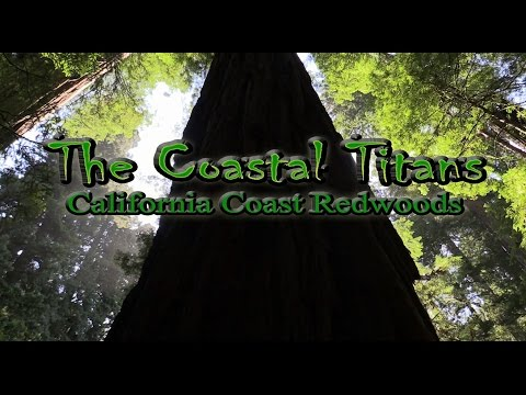The Coastal Titans - Giant California Redwoods Documentary Film (HD) Redwood Forest in Spring 2016