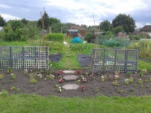 Amy's Allotment: Episode 10, July 2014