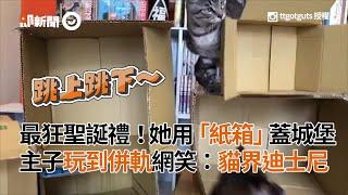 她用「紙箱」蓋貓界迪士尼樂園城堡 3隻貓主子玩到併軌|寵物|寵物玩具