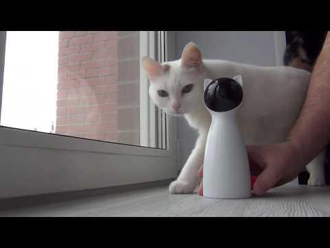 алиэкспресс посылка игрушка для кота c aliExpress