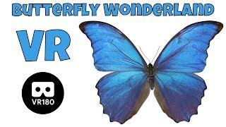 Butterfly Wonderland in VR 180   Clintus.tv