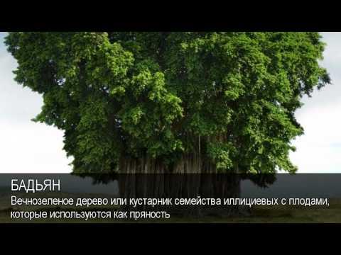 Бадьян. Толковый Видеословарь русского языка