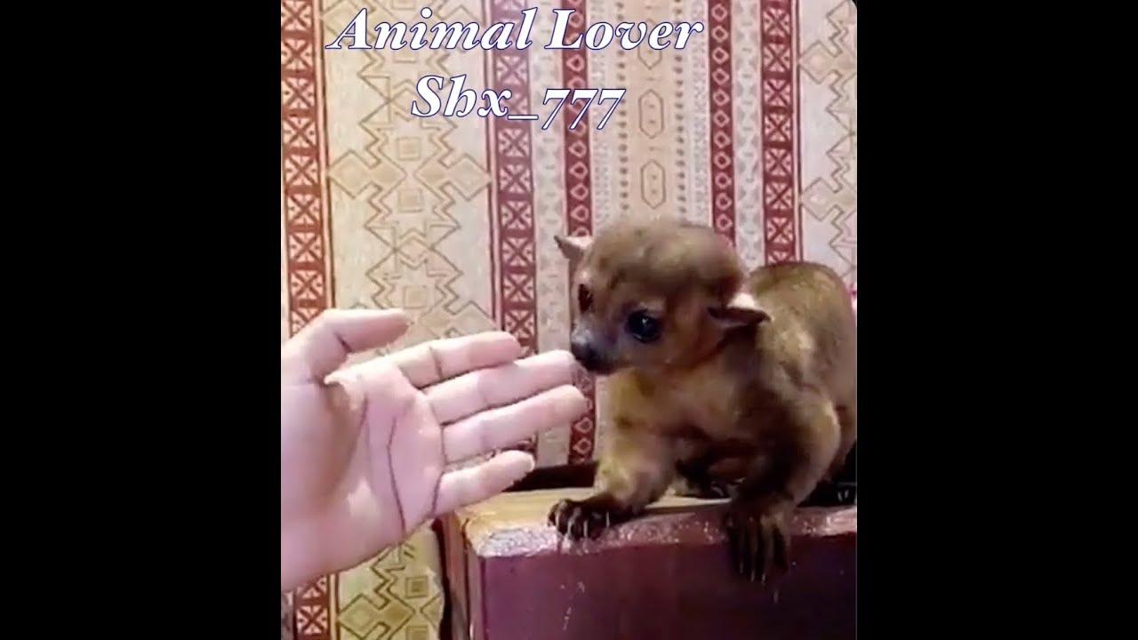 اسامه الدغيري و حيوان الكنكاجو الجديد وكعبول وعبسي