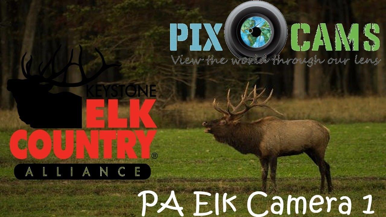 PA Elk Country Visitor Center - Camera 1 Live Stream