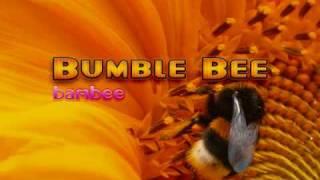 Bumblebee - Bambee
