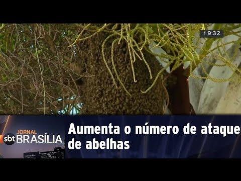 Aumenta o número de ataque de abelhas