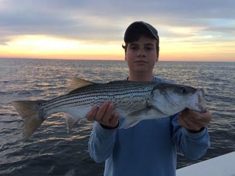 Stripers at sunset chesapeake bay striped bass fishing for Striper fishing chesapeake bay
